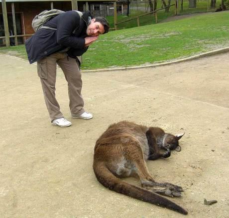 Canguro durmiendo, Ballarat.